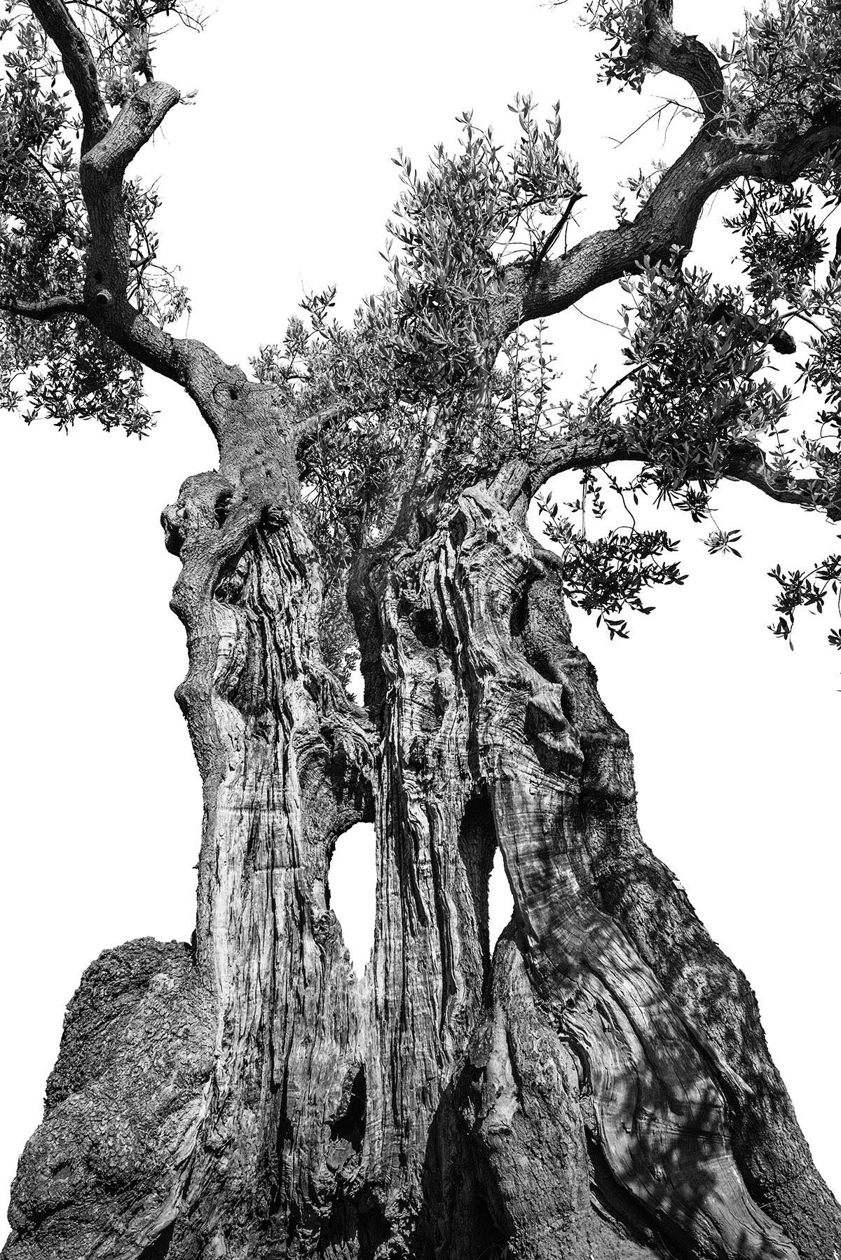 martin-ogolter-Monumentali-nature-landscape-photographer-01