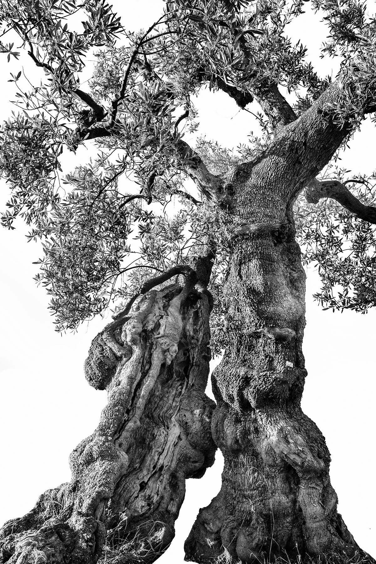 martin-ogolter-Monumentali-nature-landscape-photographer-02