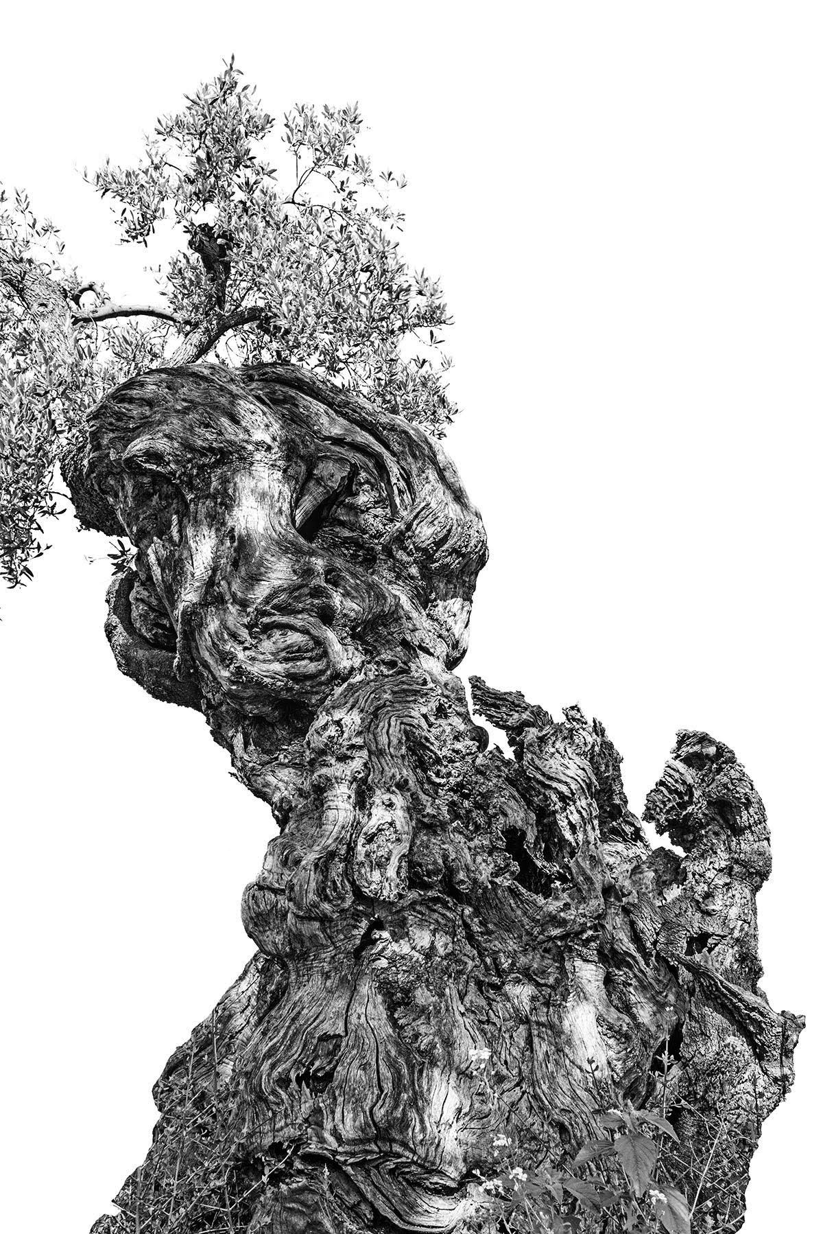 martin-ogolter-Monumentali-nature-landscape-photographer-03