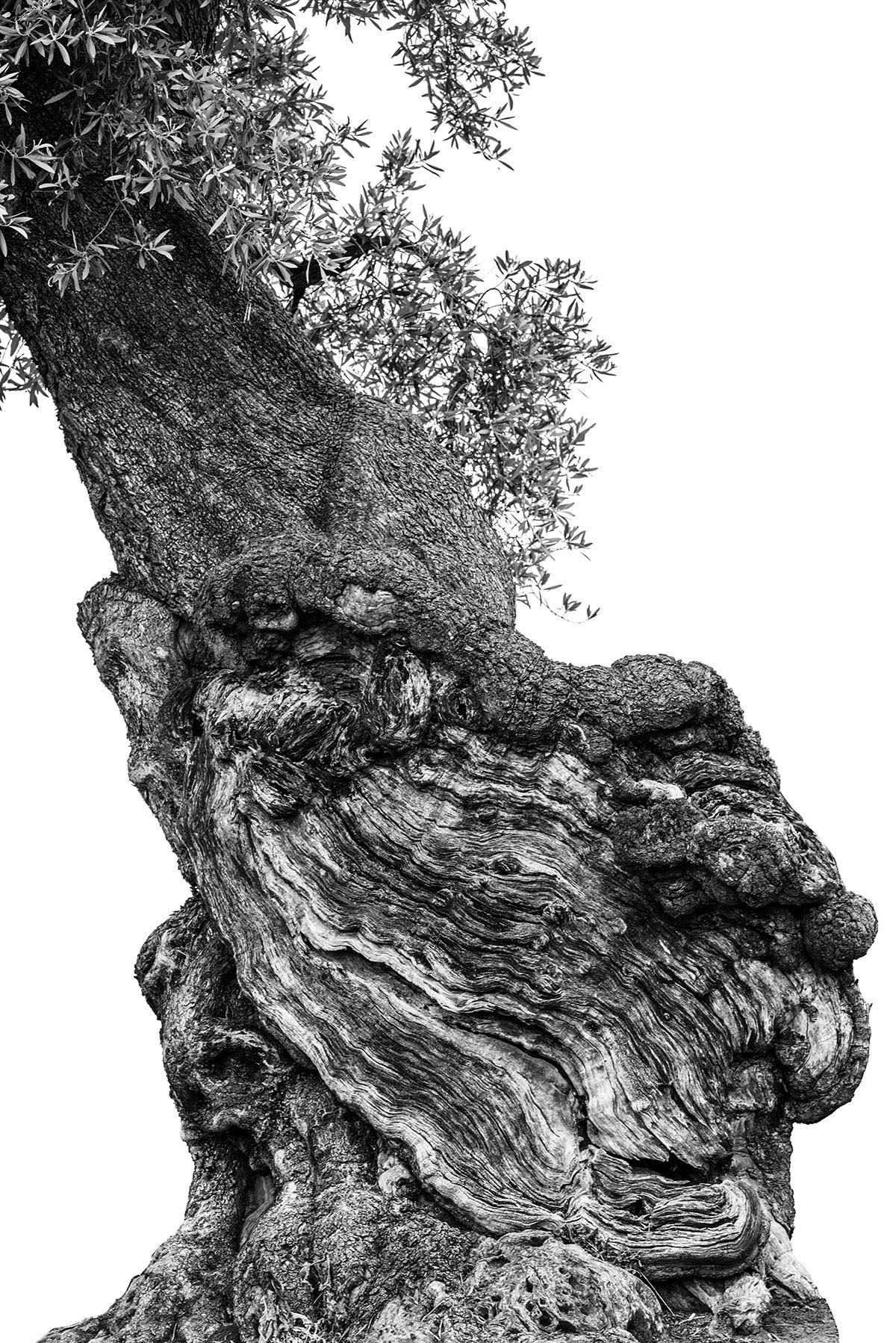 martin-ogolter-Monumentali-nature-landscape-photographer-06