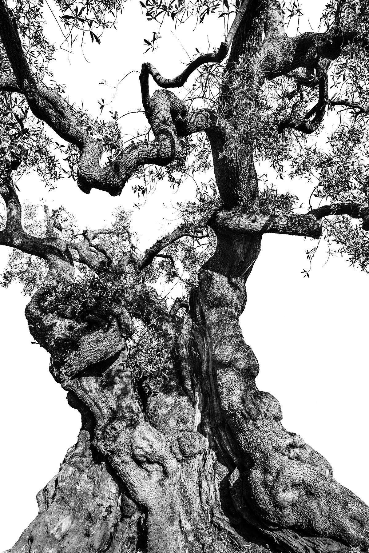 martin-ogolter-Monumentali-nature-landscape-photographer-07