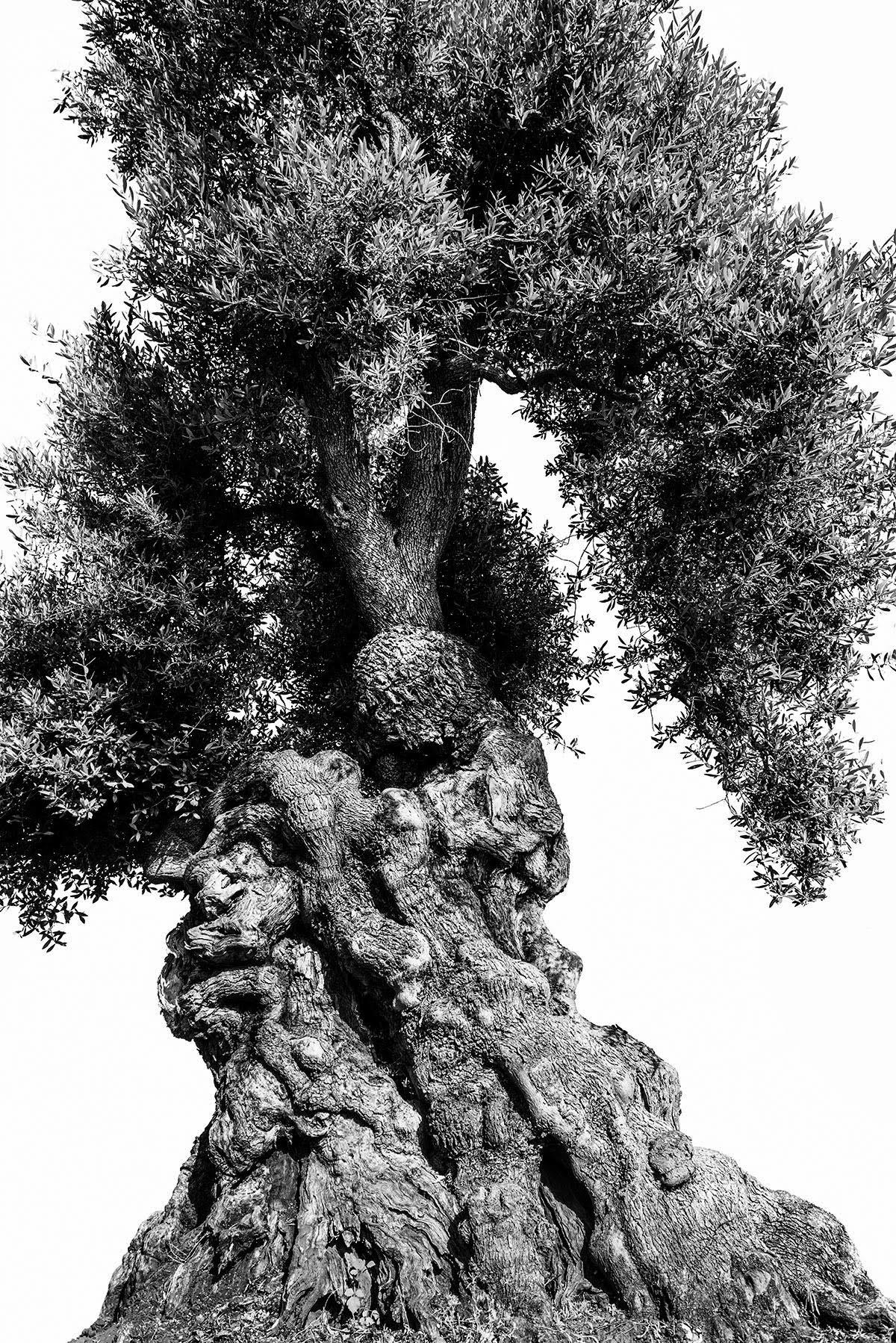 martin-ogolter-Monumentali-nature-landscape-photographer-09