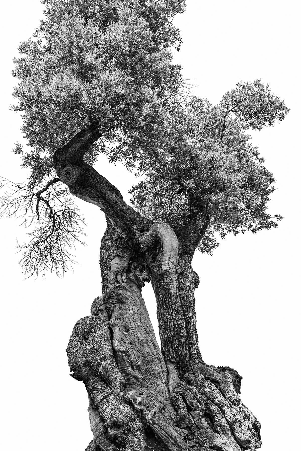 martin-ogolter-Monumentali-nature-landscape-photographer-10