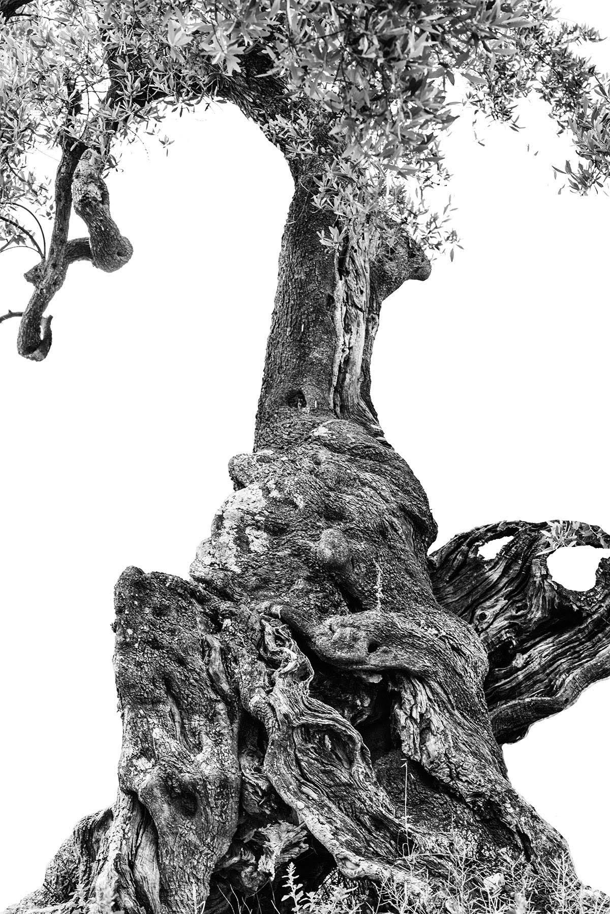 martin-ogolter-Monumentali-nature-landscape-photographer-11