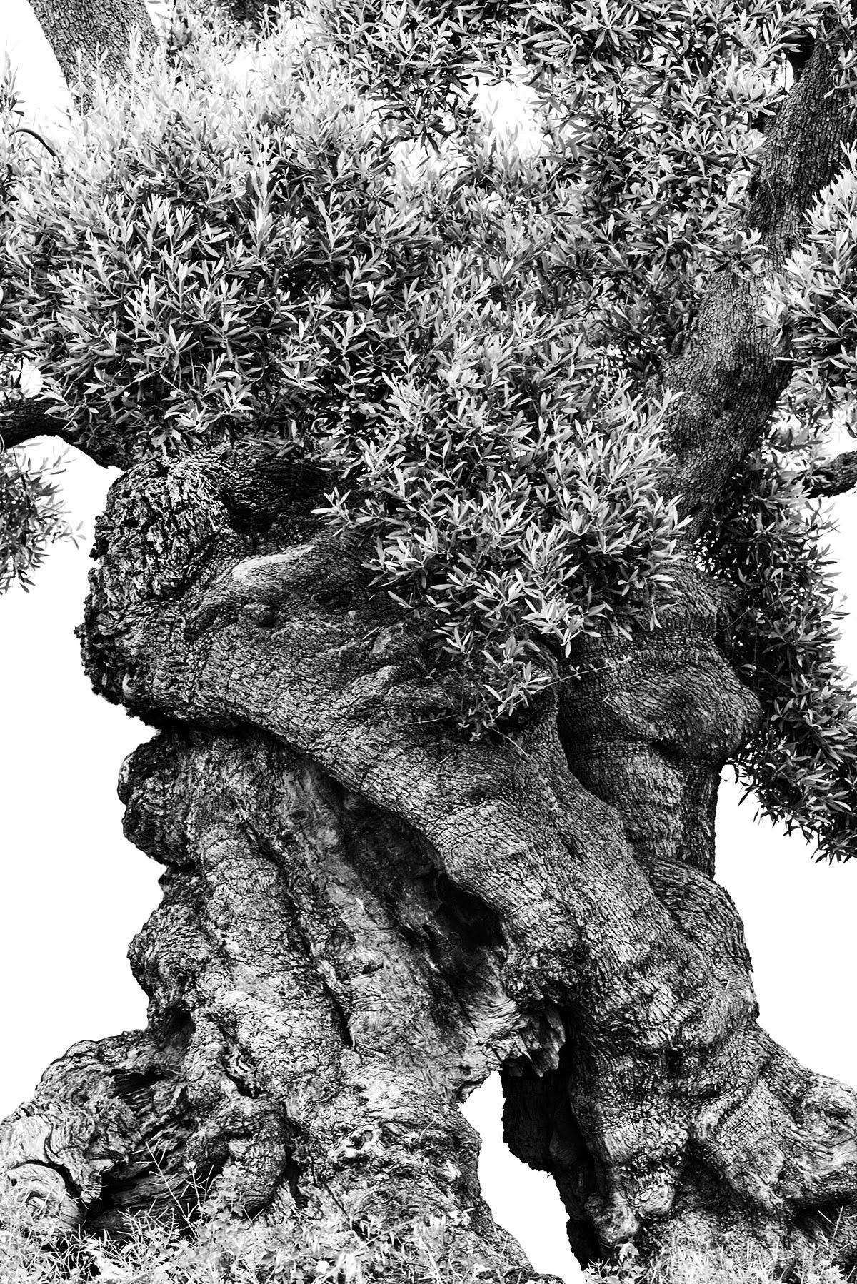 martin-ogolter-Monumentali-nature-landscape-photographer-13