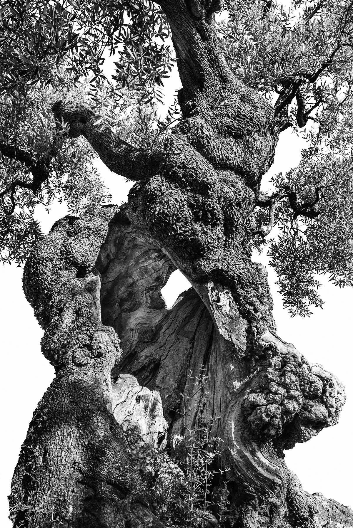 martin-ogolter-Monumentali-nature-landscape-photographer-15