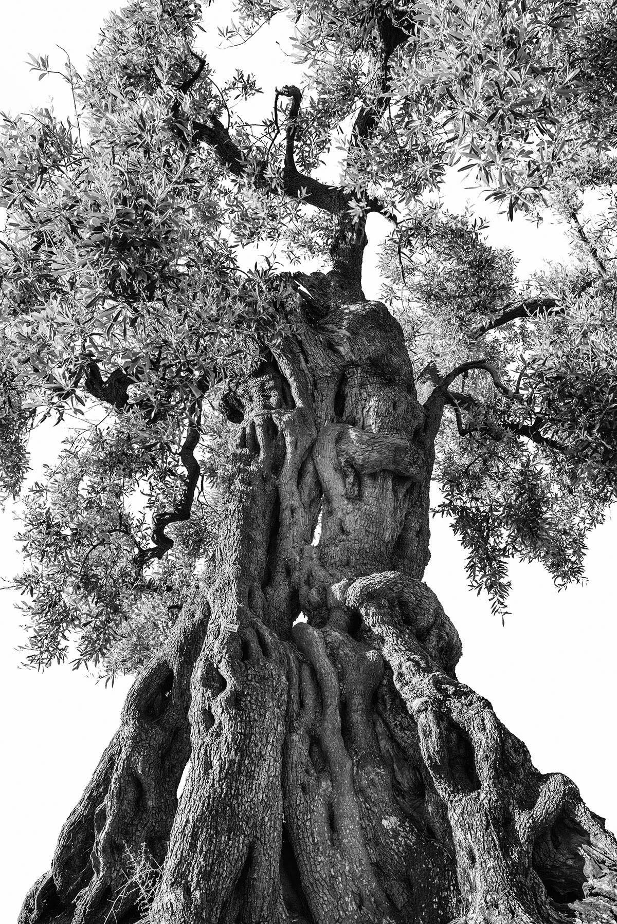 martin-ogolter-Monumentali-nature-landscape-photographer-16