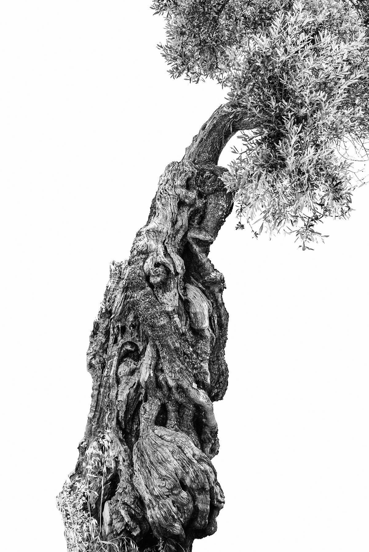 martin-ogolter-Monumentali-nature-landscape-photographer-18