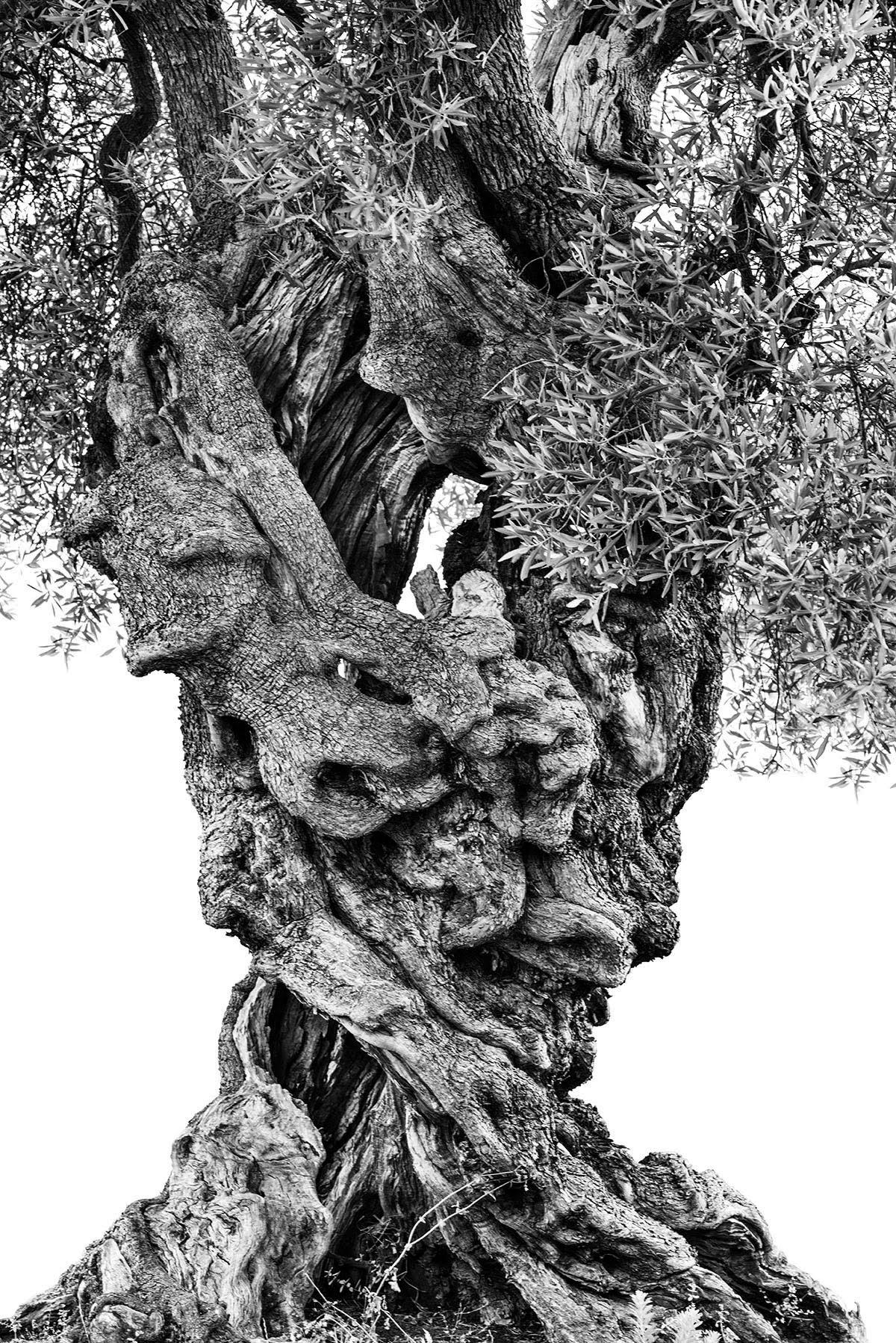 martin-ogolter-Monumentali-nature-landscape-photographer-19