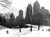 The World of Fred Stein