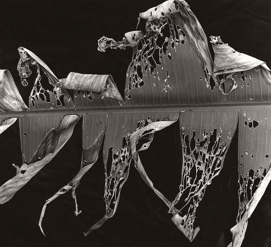 brett-weston-significant-details-03