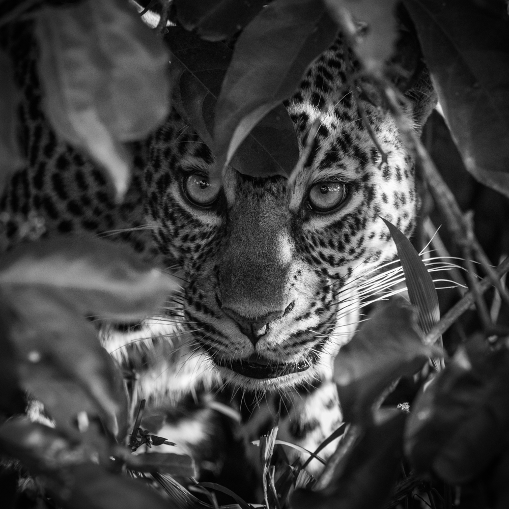 francois-pringuet-wildlife-photographer-02