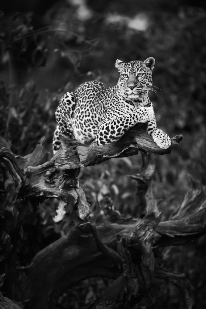 francois-pringuet-wildlife-photographer-03