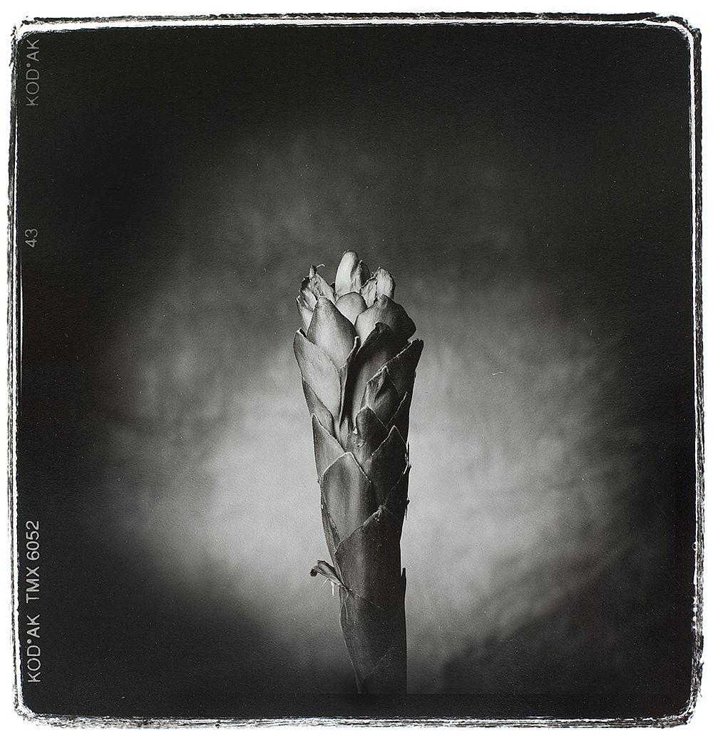nigel-maudsley-beauty-in-death-01