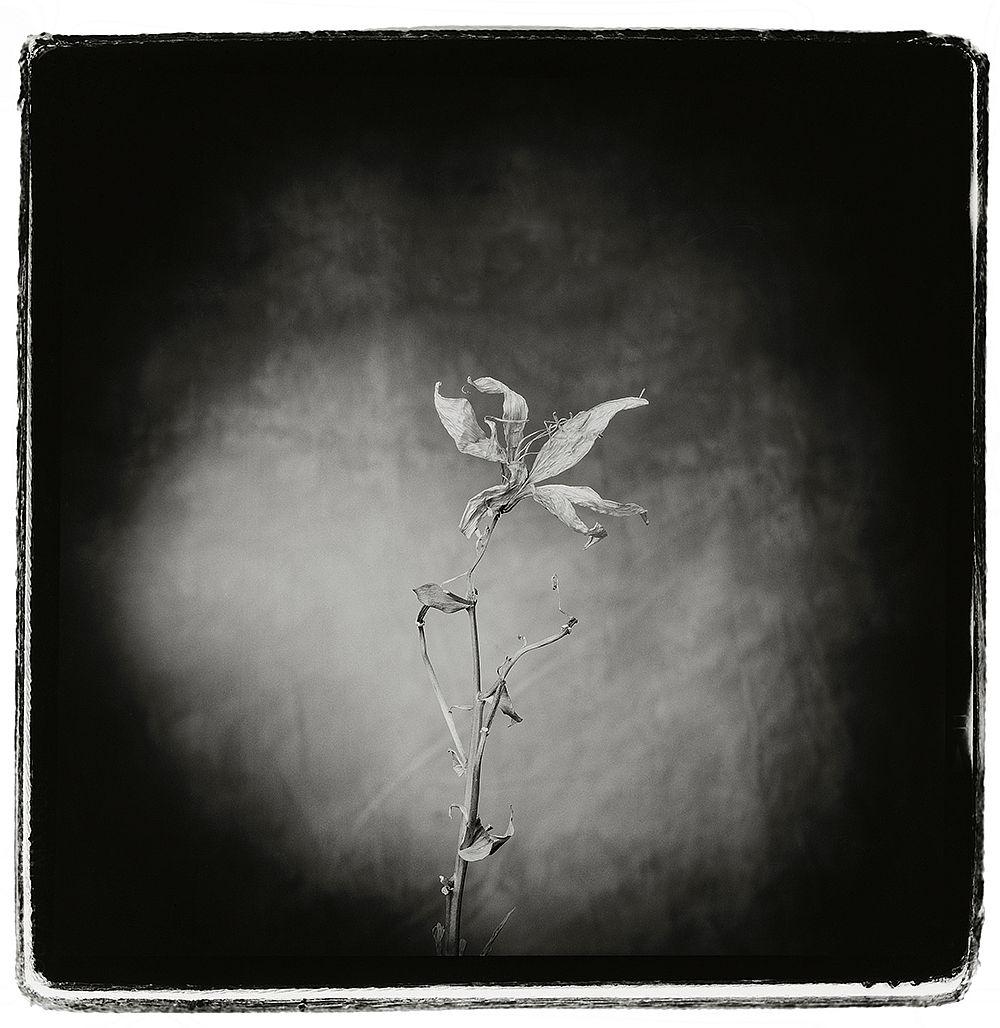© Nigel Maudsley: Beauty in Death