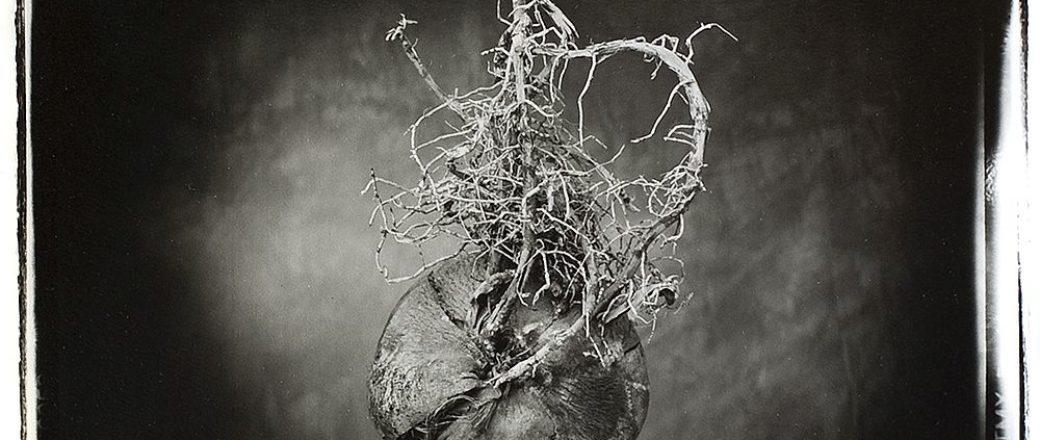 Nigel Maudsley: Beauty in Death
