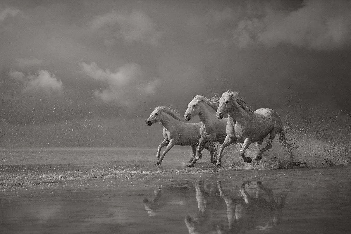 drew-doggett-band-of-rebels-white-horses-of-camargue-09