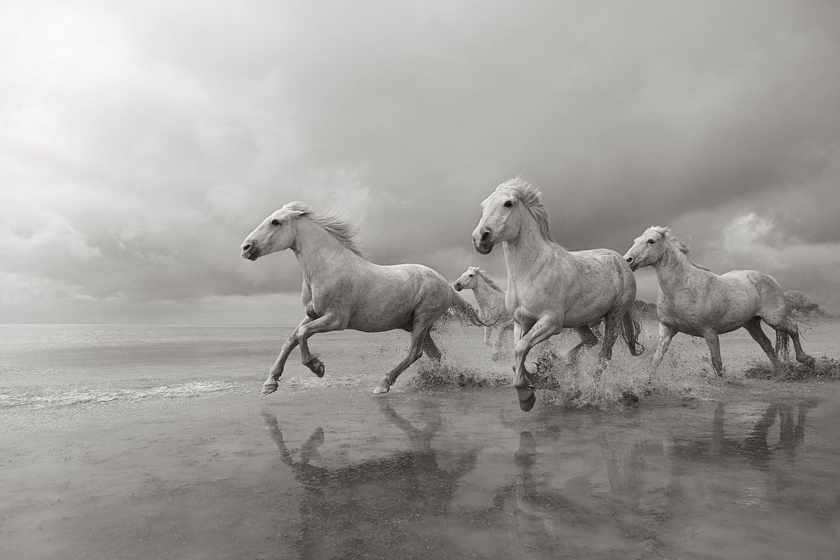 drew-doggett-band-of-rebels-white-horses-of-camargue-10