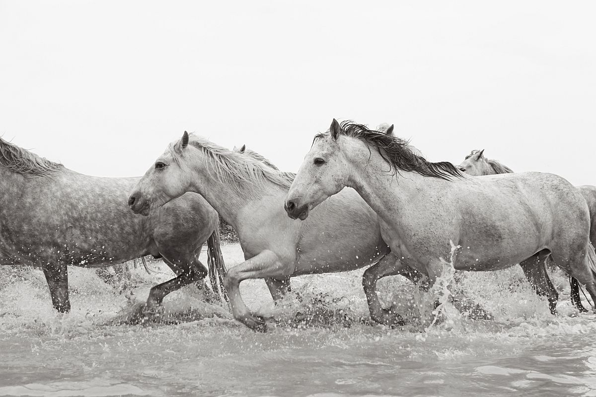 drew-doggett-band-of-rebels-white-horses-of-camargue-14