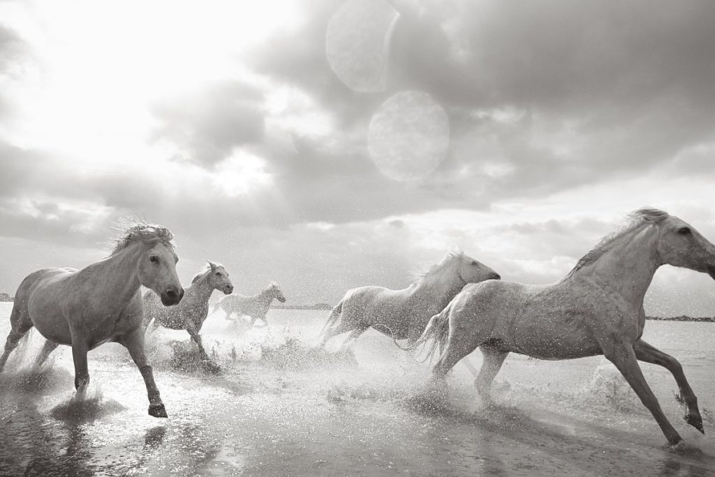 drew doggett  u2013 band of rebels  white horses of camargue