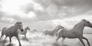 Drew Doggett – Band of Rebels: White Horses of Camargue