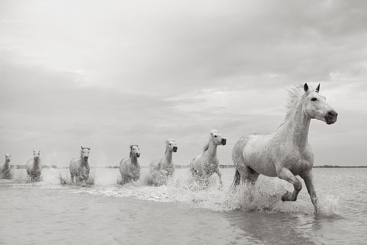 drew-doggett-band-of-rebels-white-horses-of-camargue-24