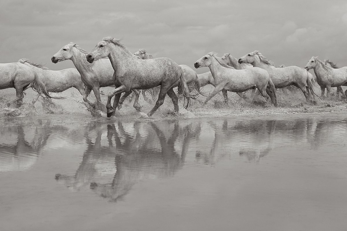 drew-doggett-band-of-rebels-white-horses-of-camargue-25