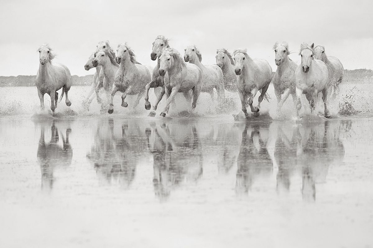 drew-doggett-band-of-rebels-white-horses-of-camargue-30