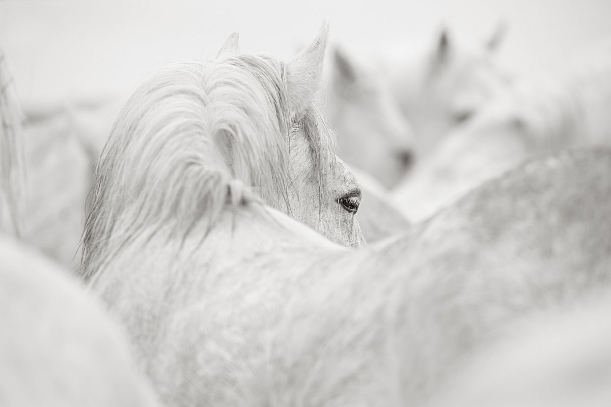 drew-doggett-band-of-rebels-white-horses-of-camargue-36