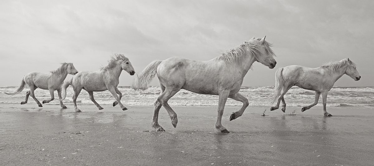 drew-doggett-band-of-rebels-white-horses-of-camargue-37