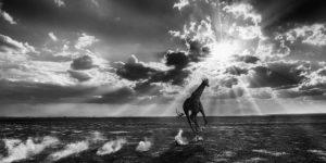 David Yarrow: Wild Encounters