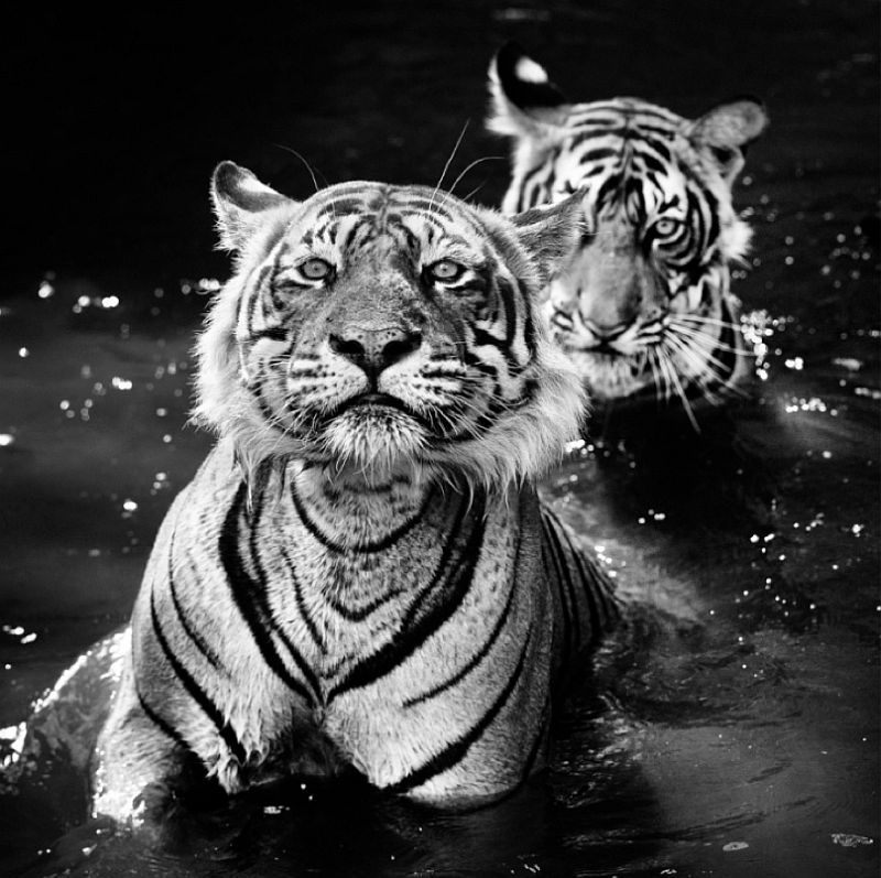 david-yarrow-wildlife-encounters-02