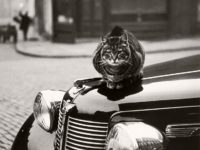 Vintage: Cats of London by Thurston Hopkins (1950s)