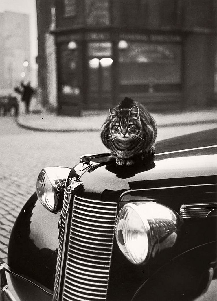 vintage-cats-of-london-by-thurston-hopkins-1950s-01