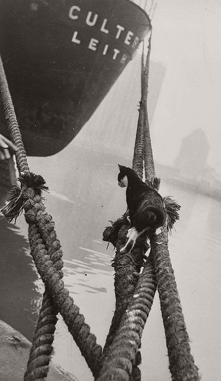 vintage-cats-of-london-by-thurston-hopkins-1950s-03