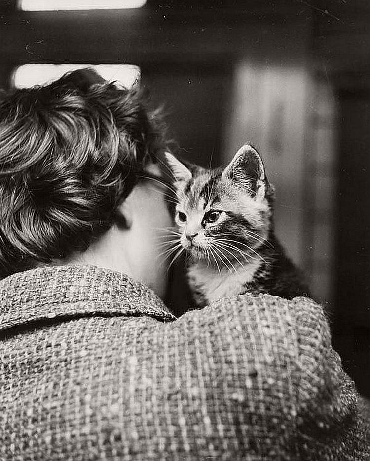 vintage-cats-of-london-by-thurston-hopkins-1950s-04