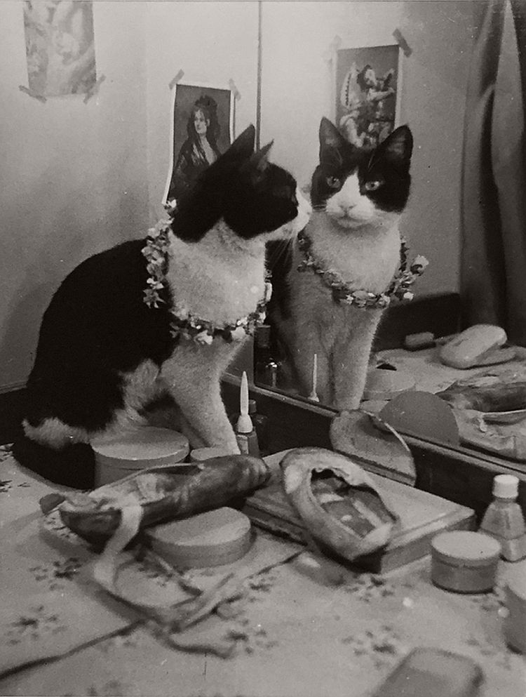 vintage-cats-of-london-by-thurston-hopkins-1950s-06