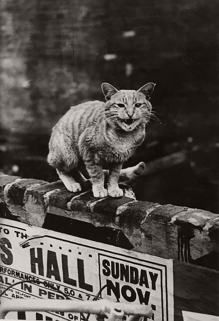 vintage-cats-of-london-by-thurston-hopkins-1950s-07