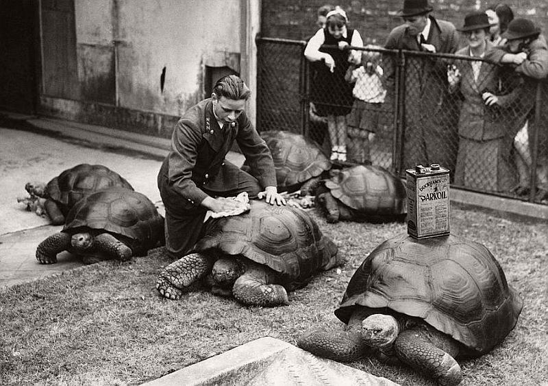 Vintage: London Zoo in the 1930s
