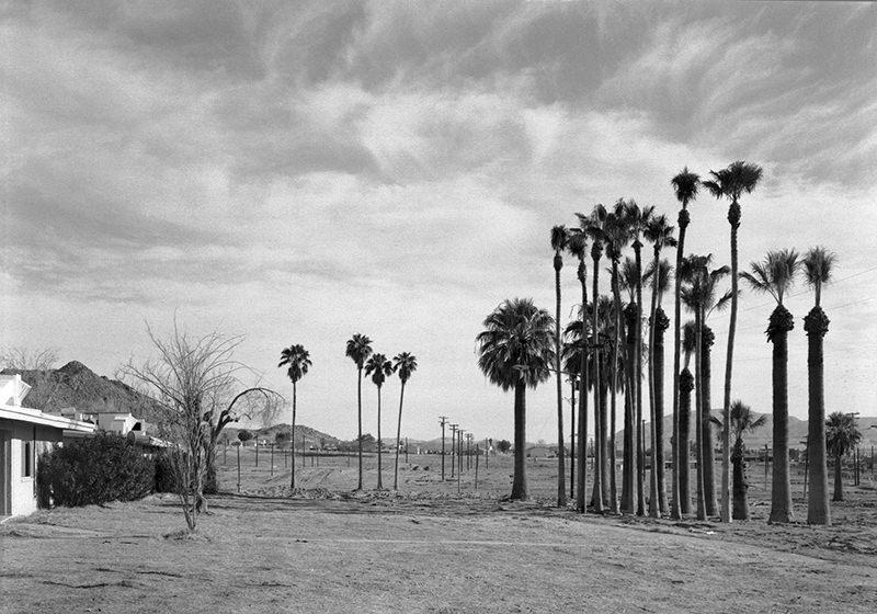 An-My Lê, 29 Palms: Marine Palms