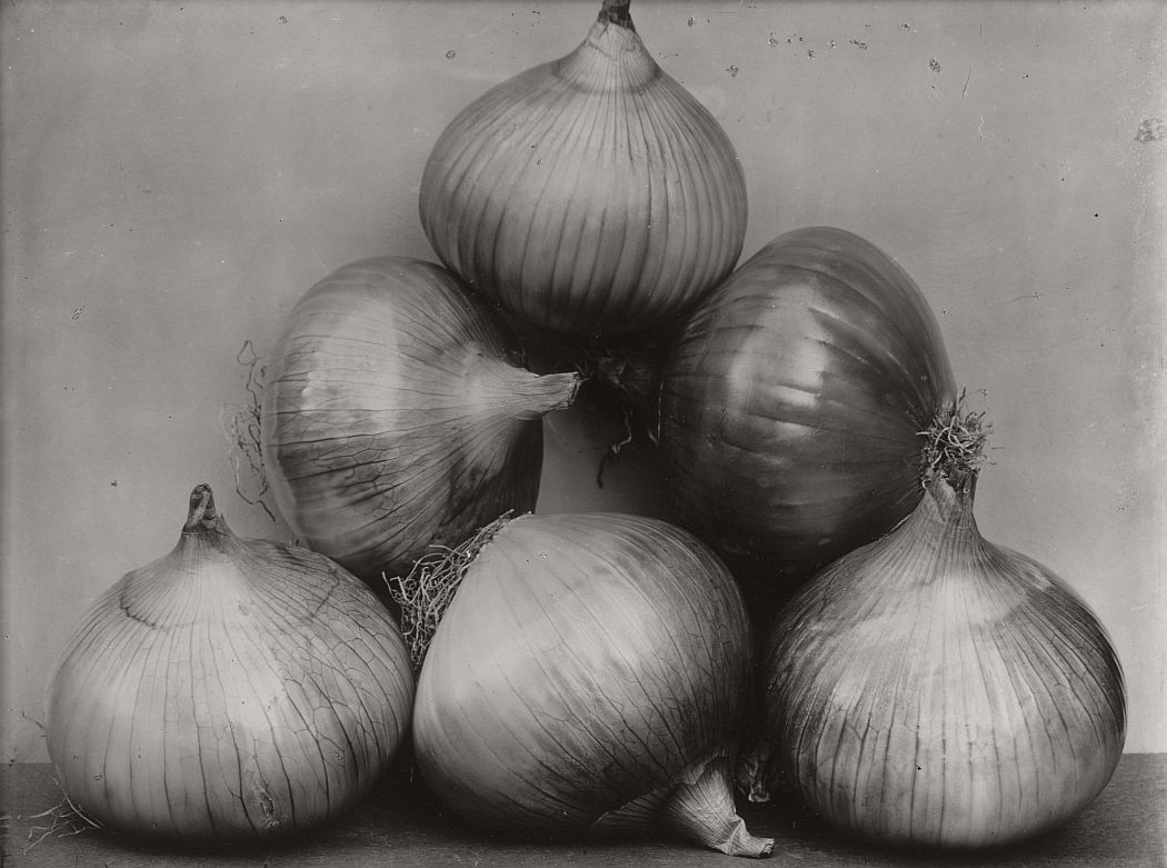 Charles Harry Jones (British, 1866–1959). Onions. c. 1900. Gelatin silver printing-out-paper print, 5 7/8 × 8 1/4″ (15 × 21 cm). The Museum of Modern Art, New York. Promised gift of Robert B. Menschel