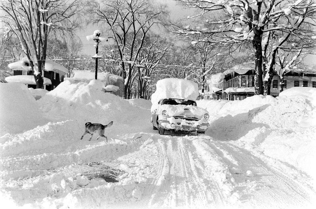 A car with several feet of snow on it drives down the street as a dog scurries out of the way.