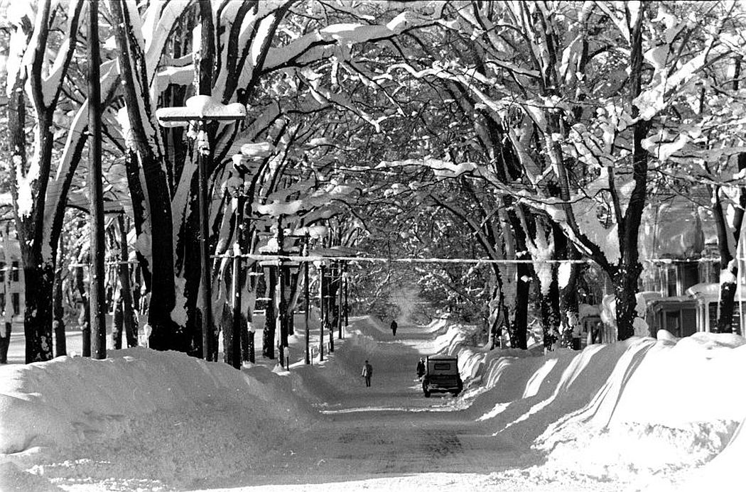 Snow-covered trees provide a canopy for this Oswego street, December 1958.