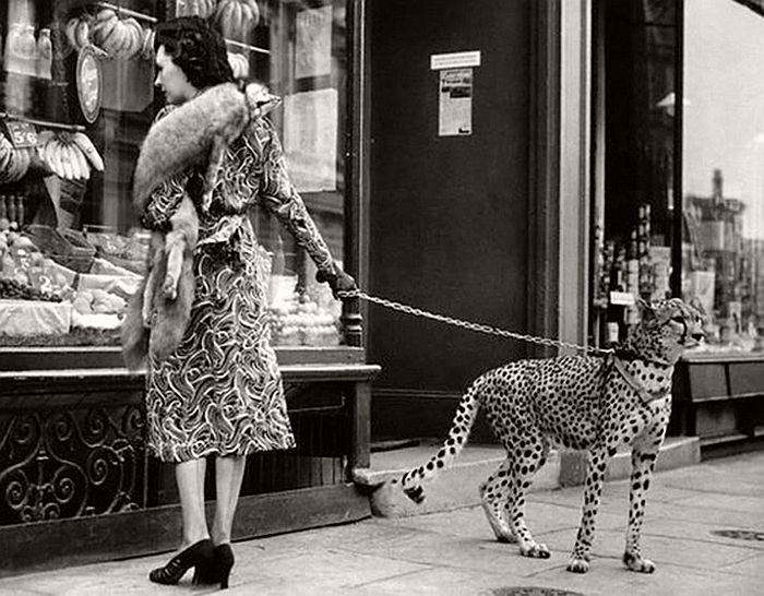 Phyllis Gordon with a cheetah on a street of London
