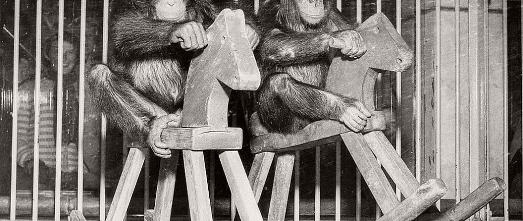 Vintage: Copenhagen Zoo (early 20th Century)