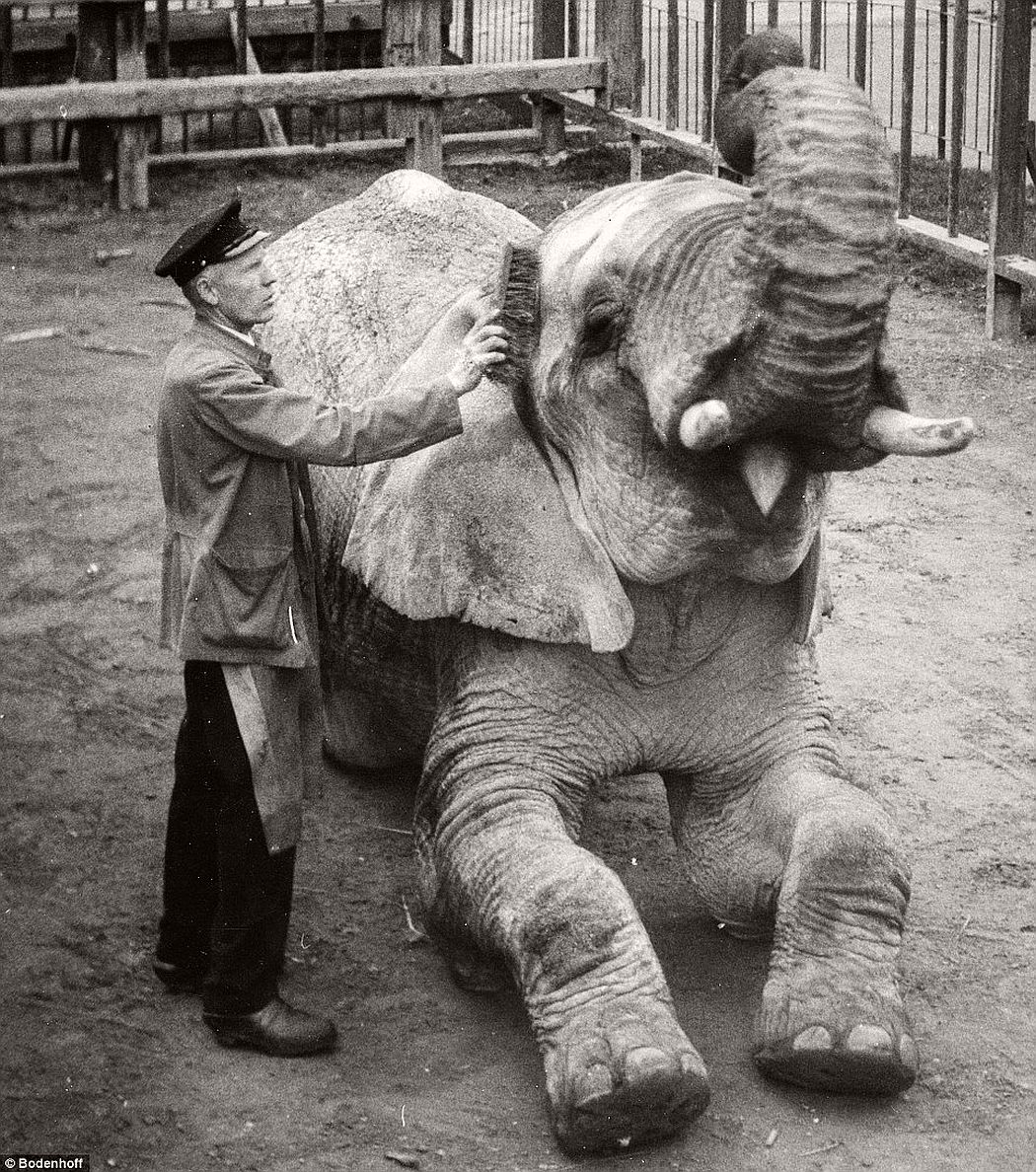 A elephant seemed to be enjoying cleaning