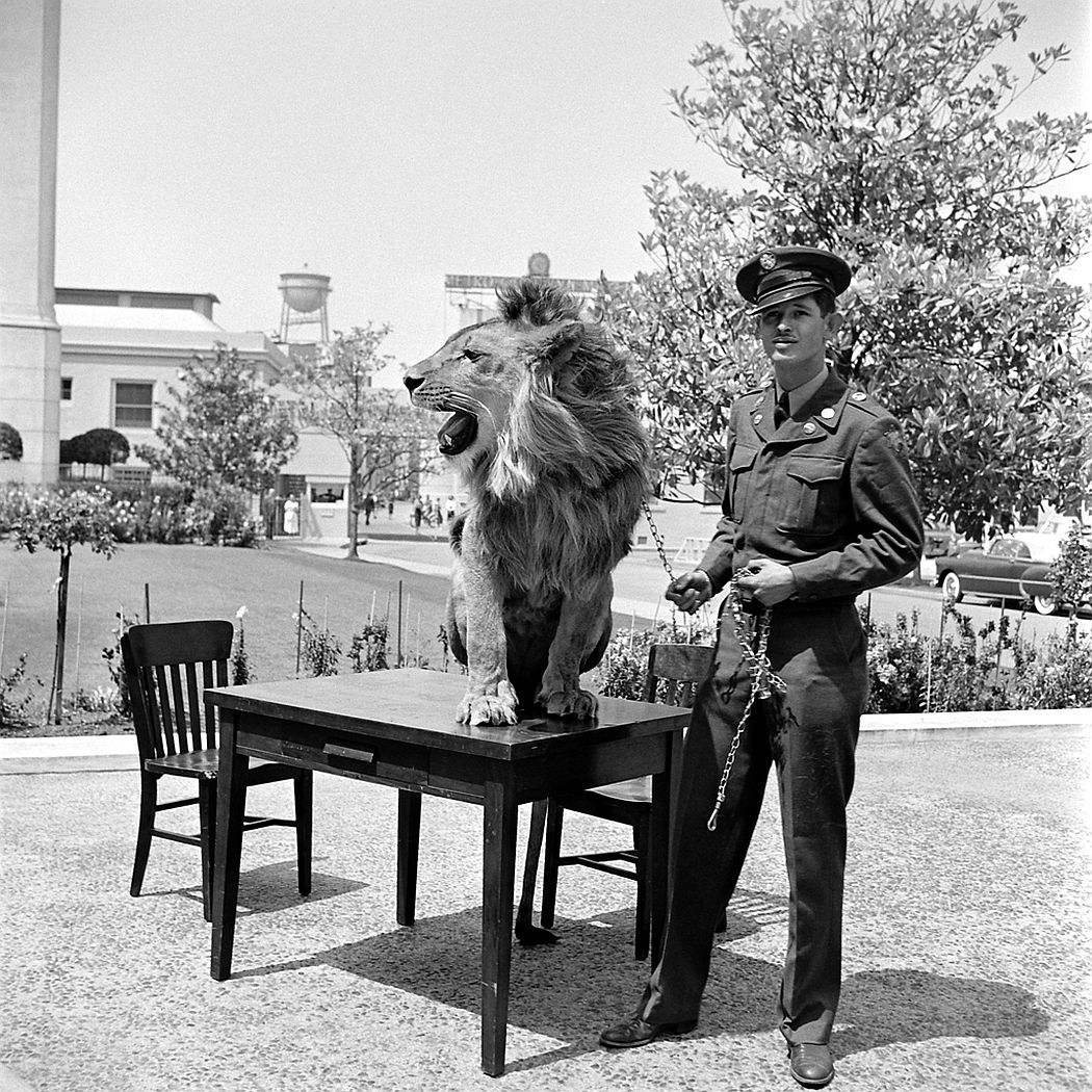 Floyd Humeston and Fagan the lion outside the Thalberg Building, Hollywood, 1951.