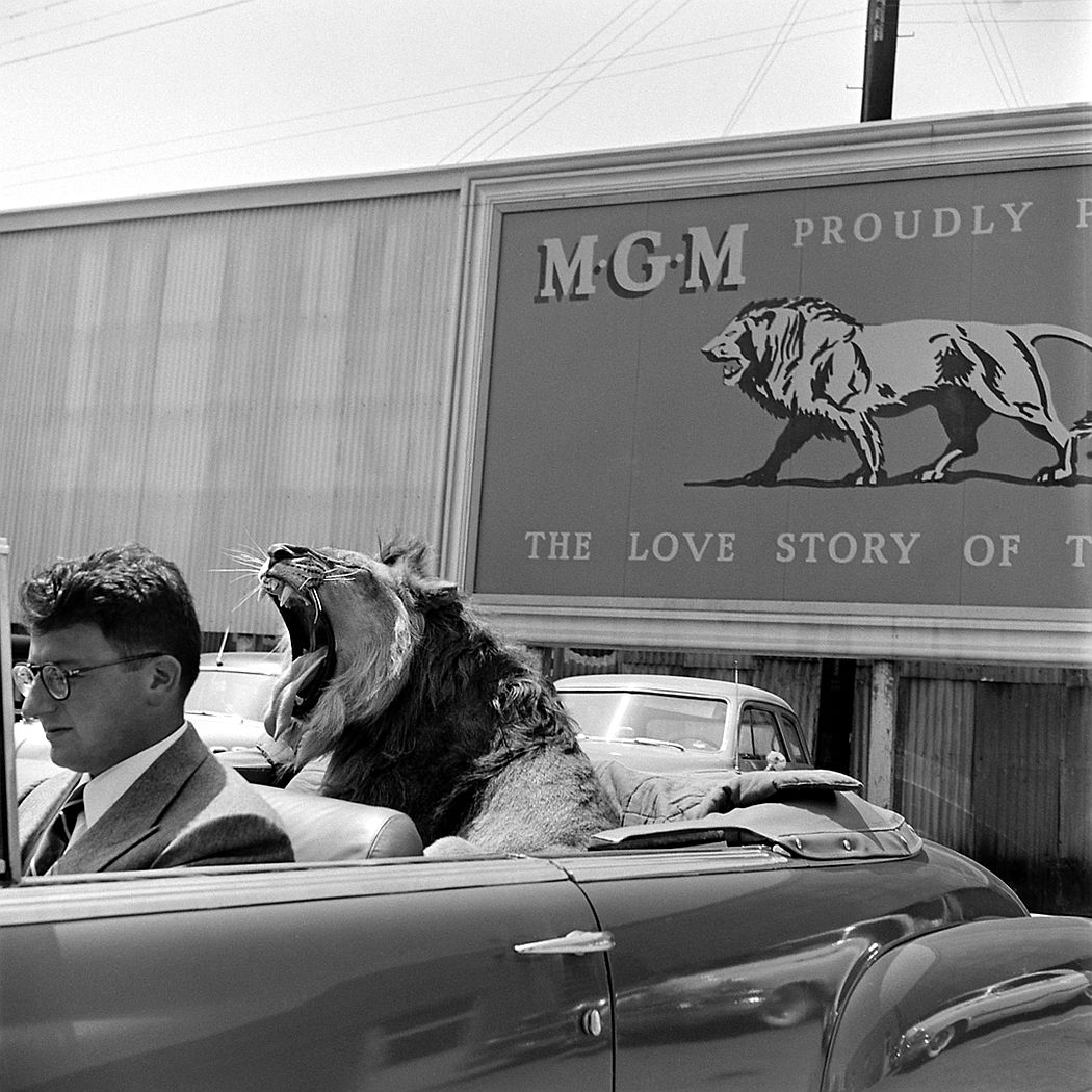 Fagan the lion with movie producer Sidney Franklin, 1951.