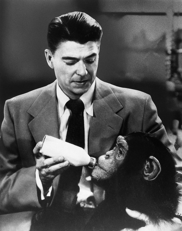 1951  Reagan feeds his simian costar in Bedtime for Bonzo.  Image: Bettmann/Corbis