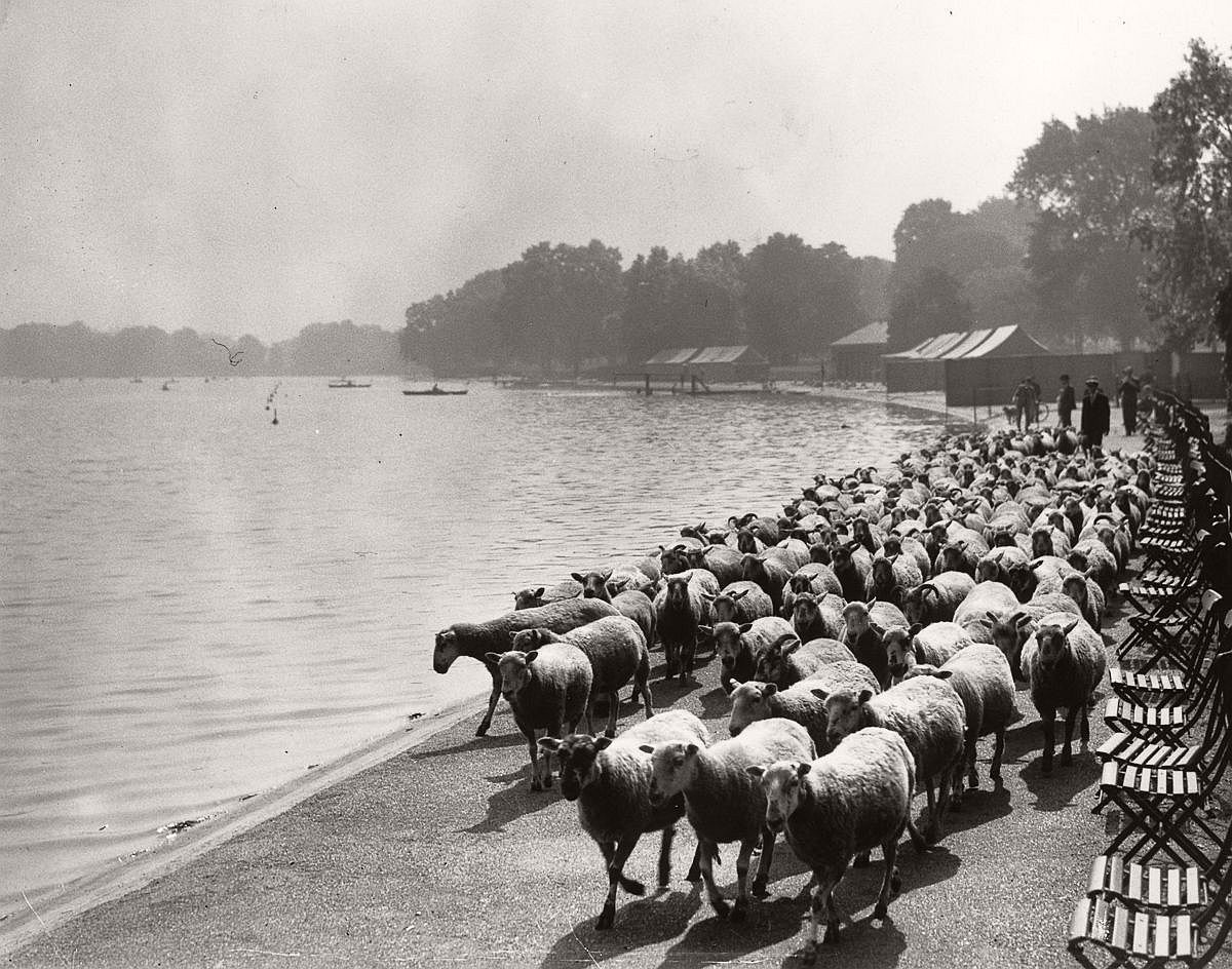 1936  By the Serpentine in Hyde Park.  Image: Fox Photos/Getty Images